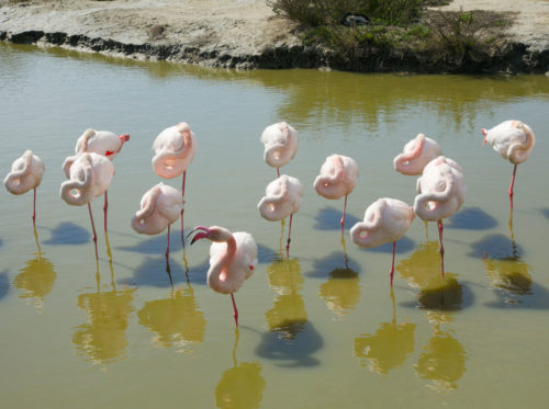 #ladygaga#danceurs#pinkflamants